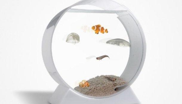 L'acquario di Rosalinde, e di tutti