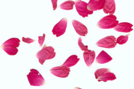 Saremo farfalle, petali di fiore o quegli insetti che mangiano la carne