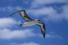 Baudelaire, l'albatros e lo straniero