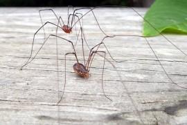 Legàmi: Il ragno del libro accanto
