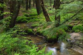 Ecologia: ecologi o ecologisti?