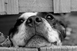 I cani e l'odore del cancro