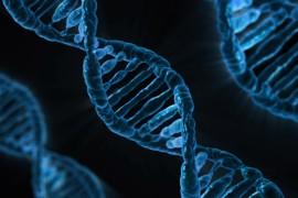 Genetica ed eugenetica: nuove sfide e miti da sfatare