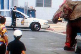 Torture al circo, il caso Tyke: chi è la vera bestia?