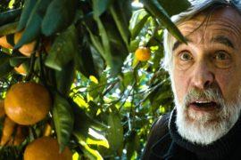 Tangerines: la pace si fa con i mandarini