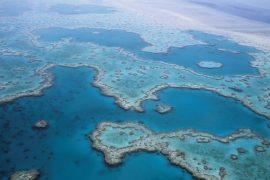 La Grande barriera corallina sta morendo