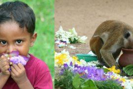 Sri Lanka, meta più unica che rara