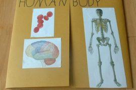 6 miti da sfatare sul corpo umano