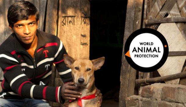 FUNDRAISING PER LA WORLD ANIMAL PROTECTION
