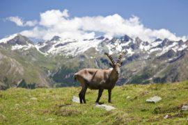WWF: la sesta estinzione di massa è alle porte