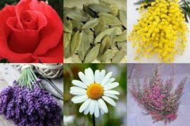 Botanica è sinonimo di Arte