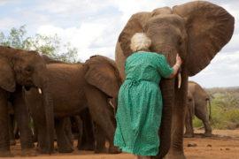 Daphne Sheldrick, la donna che salva gli elefanti in Kenya