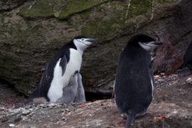 Nel regno animale l'omofobia è contro natura