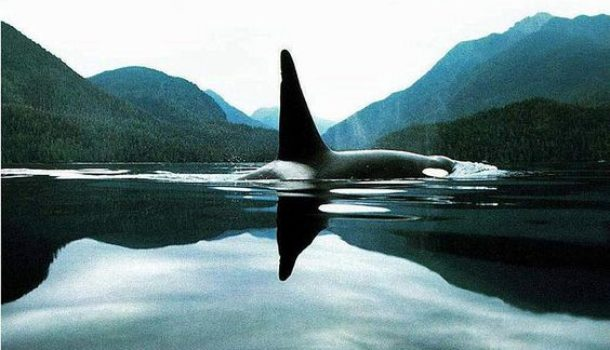 HORCYNUS ORCA, IL MOSTRUOSO CAPOLAVORO DI D'ARRIGO