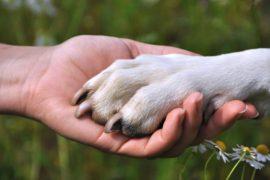 Il cane perfetto a tutti i costi: è così che parliamo di evoluzione?