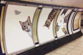 CONTRO IL MARKETING SFRENATO I GATTINI INVADONO LA METRO LONDINESE
