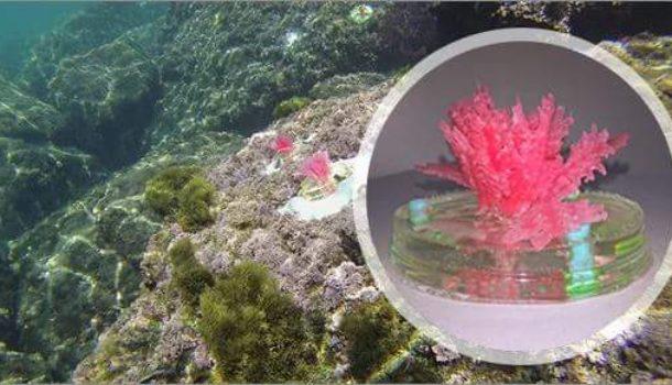 In Liguria i cambiamenti climatici si studiano con le alghe artificiali