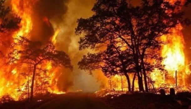 Incendi in Italia. Il bilancio: oltre 120 mila gli ettari di vegetazione andati in fumo