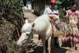 Una biblioteca a cavallo per sconfiggere l'analfabetismo