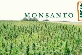 [Dossier] Monsanto: storia della più grande banca di semi al mondo