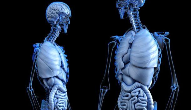 L'influenza del microbiota sulla sclerosi multipla