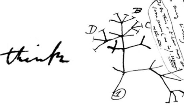 Del disegno divino e degli umani scarabocchi