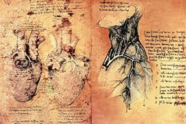 I disegni di Leonardo: Lo studio sull'anatomia umana