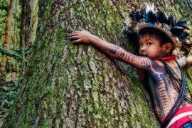 La Foresta Amazzonica: preservazione e redditività