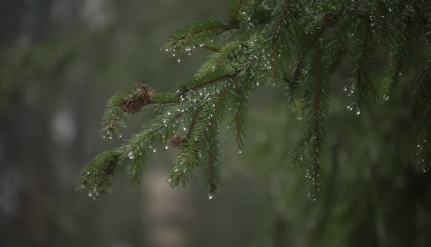 Immersioni d'acqua piovana