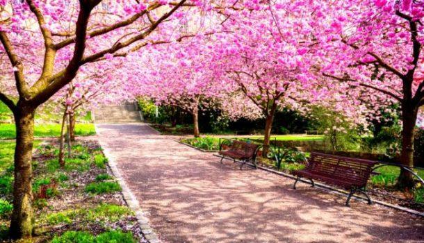 è primavera anche in periferia