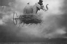 L'elefante nell'arte tra scenari da combattimento e fiabe surreali