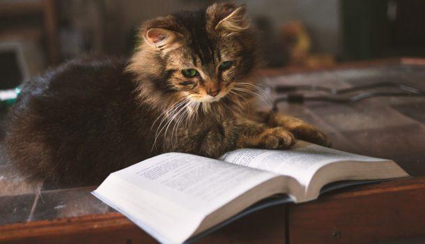 I gatti e la filosofia