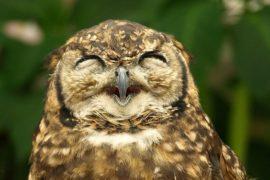 Del riso in banco: come chiarire i concetti attraverso la risata