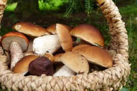 Grandi protagonisti dell'autunno: i funghi e le loro proprietà