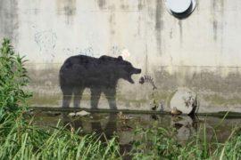 Ambientalismo e arte: spazio alla Street Art