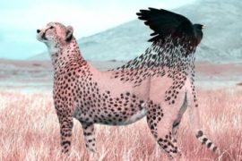 Perché il mondo naturale diventa surreale con un tocco di Photoshop